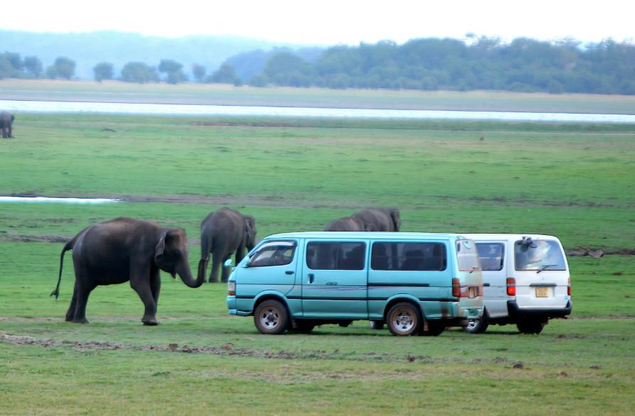 Séjour au Sri Lanka, parcourir ses meilleurs parcs nationaux